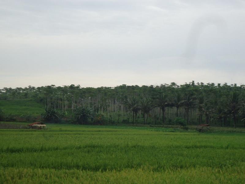 Tanah Kosong 2